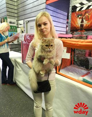 золотая кошка в пензе