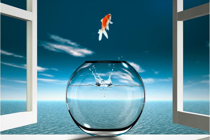 Рыбка и аквариум