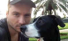 Лазарев пристраивает бездомных собак