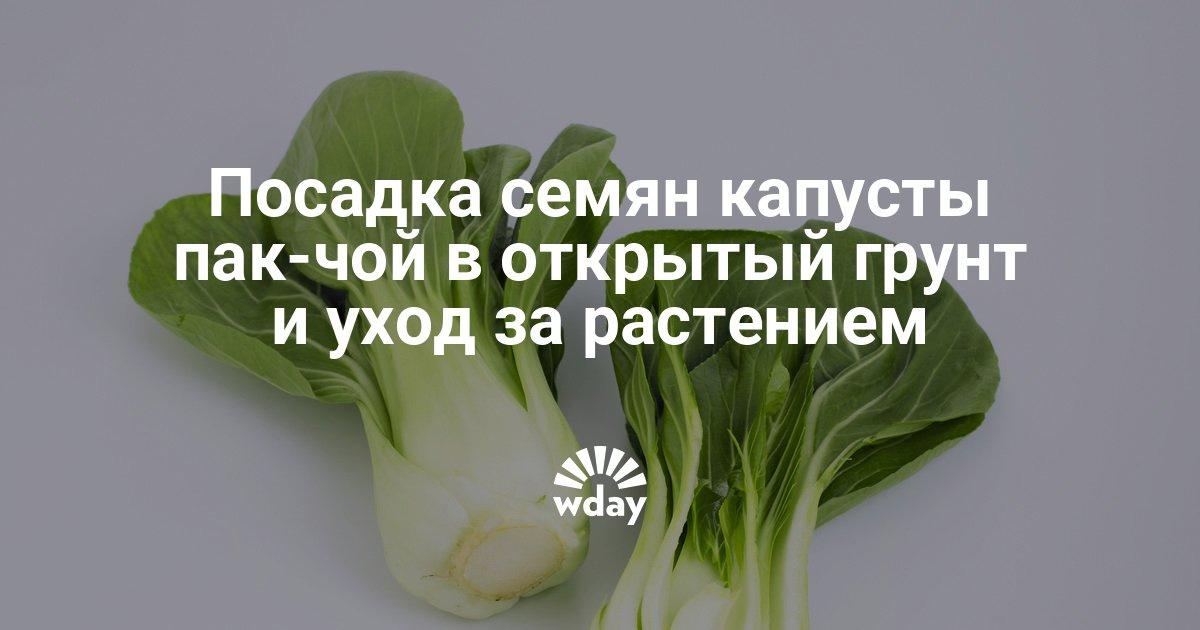 Выращивание капусты пак чой в открытом грунте