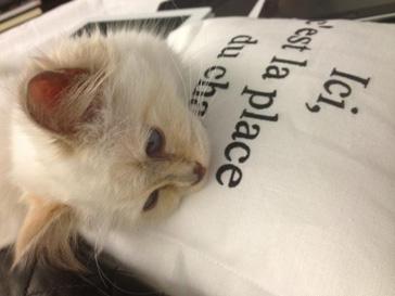 Кошка Карла Лагерфельда (Karl Lagerfeld) дала имя новой сумке Chanel