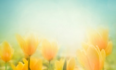 Весна придет в Москву на Пасху