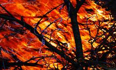 Лесные пожары в Израиле локализованы