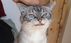 Милота дня: кошка-вампир – новая звезда Instagram