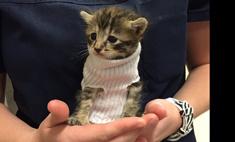 Чудом выжившему котенку сделали свитер, чтобы он согрелся