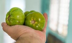 Помощь с грядки: как использовать помидоры от варикоза