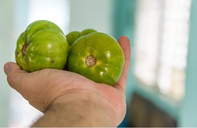 помидоры от варикоза