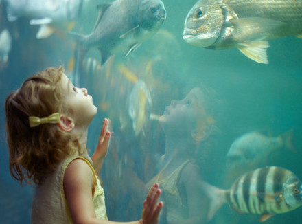 Ребенок смотрит на плывущих рыб