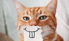 ЗаМЯУчательная идея: 5 способов порадовать котика