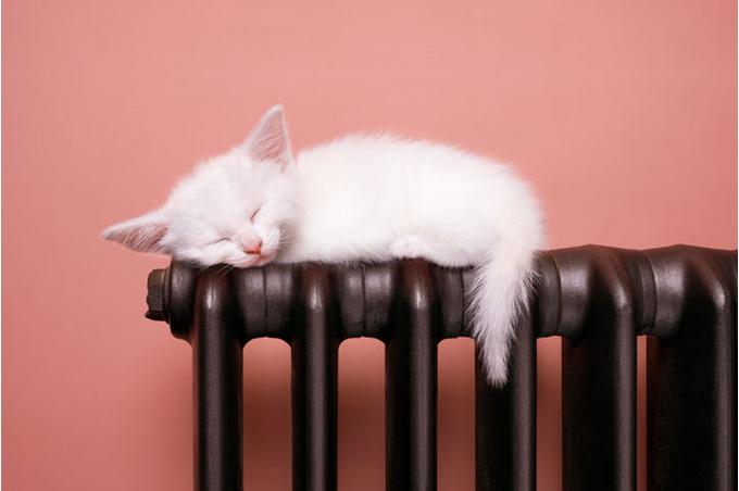 Котенок на батарее