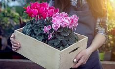 Советы эксперта: как выбрать садовый инструмент