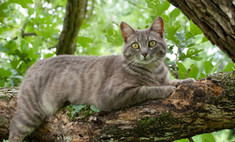 Кот из США провел на дереве больше недели