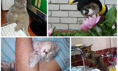 Коты на отдыхе. Выбери лучшего отпускника!