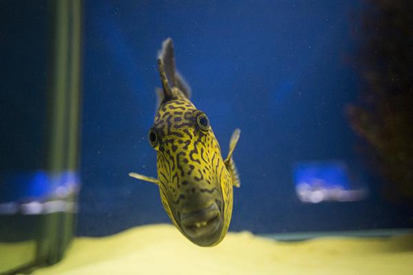 Выставка экзотических рыб «Подводный мир»