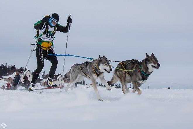 Гонки на собаках Лунежские горы 2016