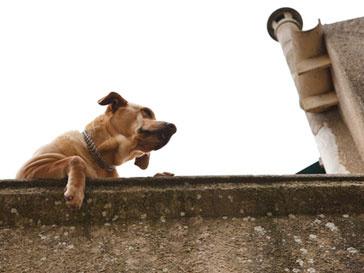 Японские спасатели вытащили из водного плена собаку