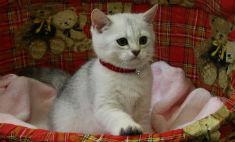 10 обаятельных пород кошек и котов Омска