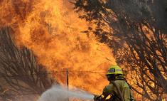 Шойгу: природные пожары в 14 регионах РФ полностью ликвидированы