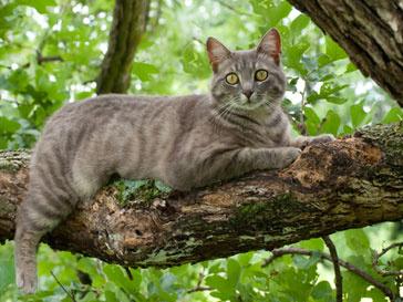 Кот Бастер просидел на дереве 9 дней