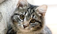 В Петербурге отметят День мартовского кота
