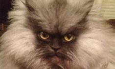 Самый суровый кот в мире умер от сердечного приступа