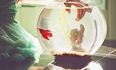 Фильтр для аквариума: видео