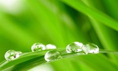 Запах скошенной травы дарит счастье