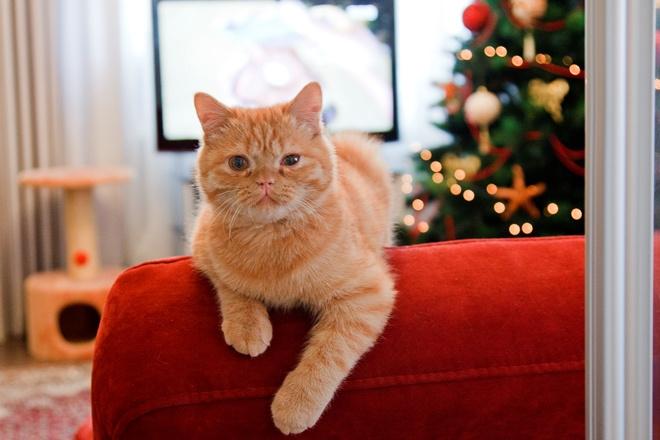Кошка Валентины Мазуниной