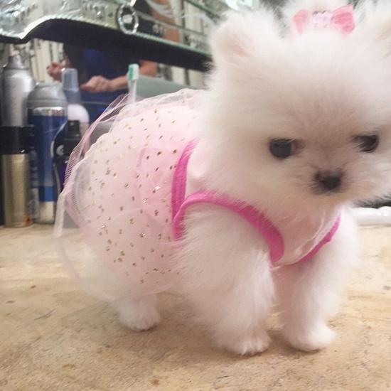 Пэрис Хилтон собака фото