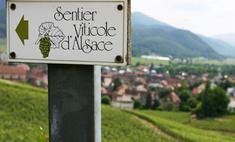 Туризм спасет французское вино