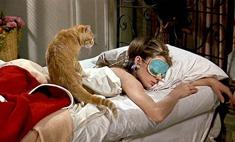 Кот в доме одинокой девушки: реальные истории за и против
