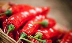Красный перец – популярная жгучая приправа