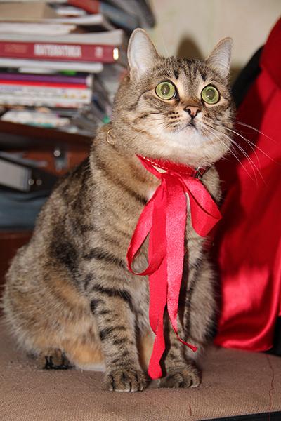 конкурс кошек Woman's Day