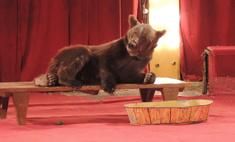 Воронежцев приглашают посетить медвежью баню