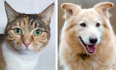 котопёс недели кошка маришка пёс трой