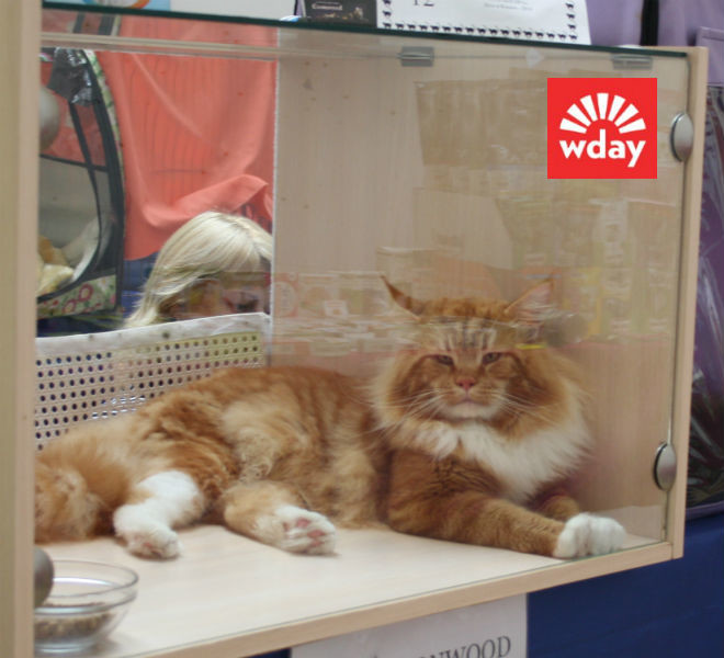 Омск, выставка кошек