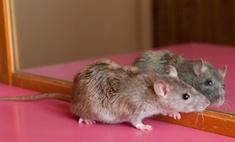 В Нью-Йорке состоялся крысиный показ мод