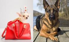 Топ-15 самых популярных в России пород собак