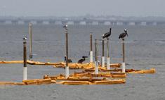 США возобновят нефтегазовое бурение в Мексиканском заливе