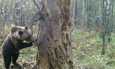 В Башкирии медведь украл мед на 175 тысяч рублей