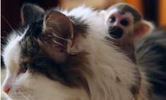 Милота дня: кошка заменила маму брошенной обезьянке