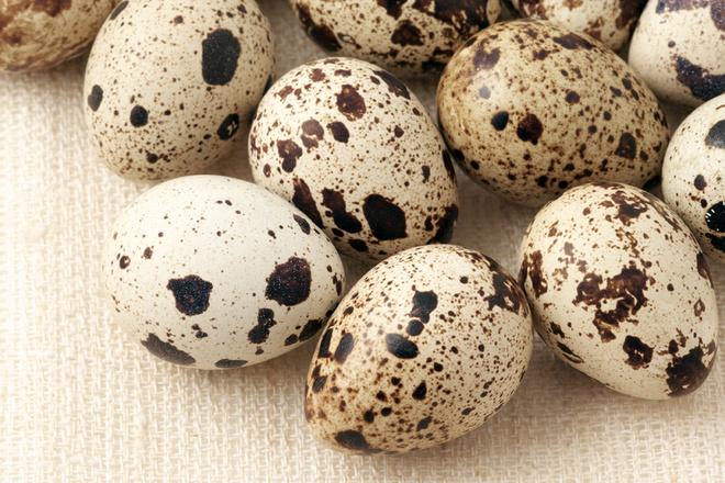сонник перепелинные яйца