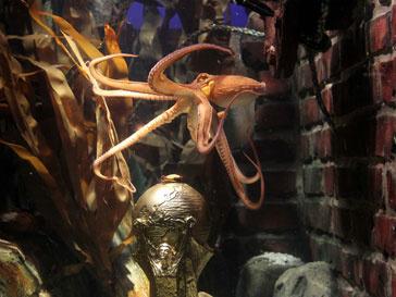 Осьминог Пауль в аквариуме с футбольной наградой