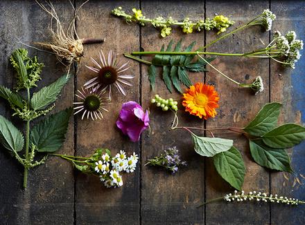 Цветы доктора Баха