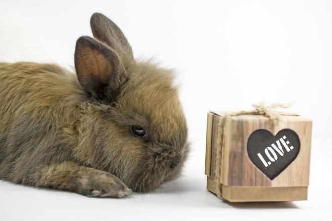 что едят кролики