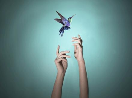 Руки и птица