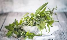 Зеленая аптека: сбор трав от паразитов