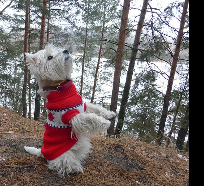 Модные собачки Рязани. Выбираем самую прикольную!