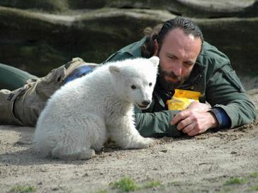 Медведь умер от инфекции