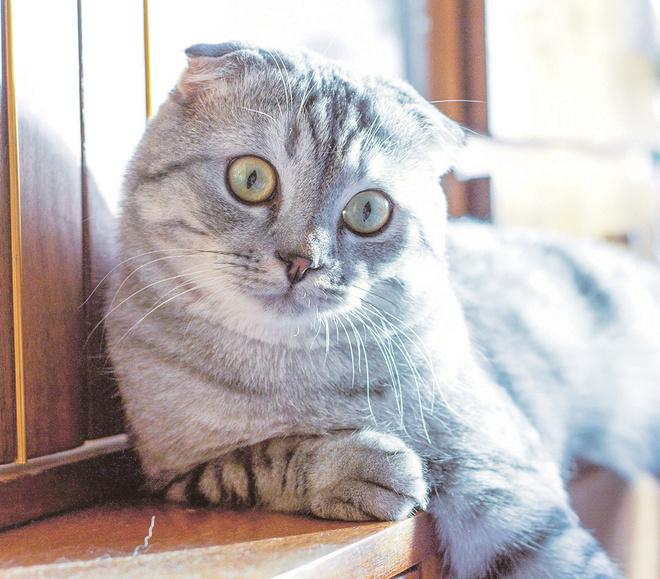 кот Степан